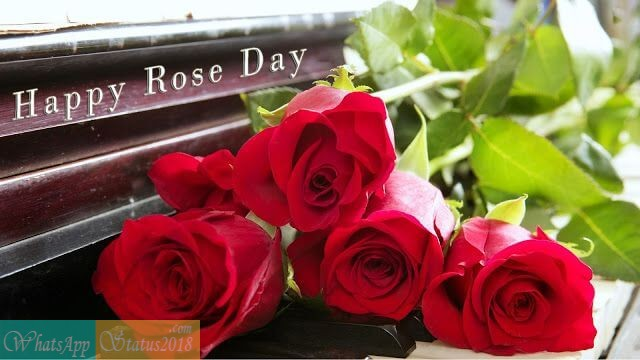 Happy Rose Day Quotes Wishes, Rose Day 2020 Images Wallpapers