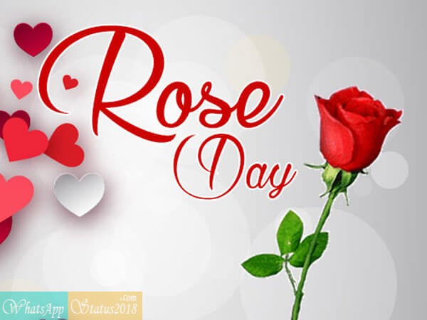 Happy Rose Day Images, 7 Best Happy Rose Day images, Beautiful flowers, Roses